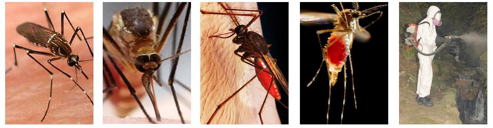 cách diệt xua đuổi muỗi hiệu quả nhanh nhất