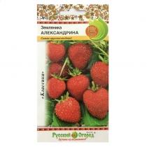 Hạt giống dâu tây Regina - 300004