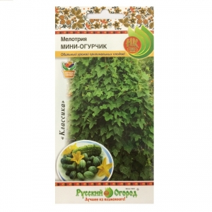 Hạt giống dưa hấu mini - 308700