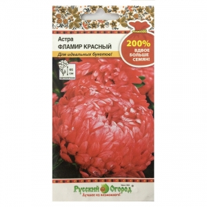 Hạt giống hoa cúc Astra đỏ - 711584