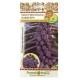 Hạt giống bắp cải mini tím - 301801-1