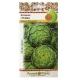 Hạt giống hoa Atisô xanh - 304500-1
