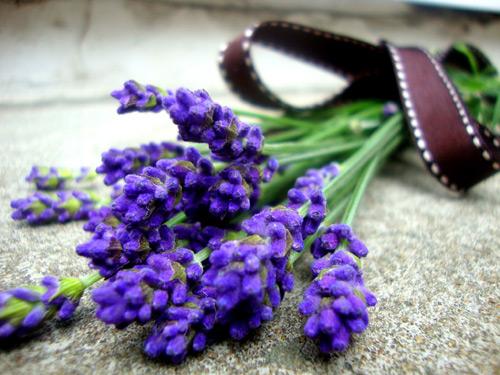 hat-giong-hoa-oai-huong-lavender-708101-5-10122016111948-312.jpg