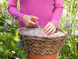 cách trồng dâu tây tại nhà 2